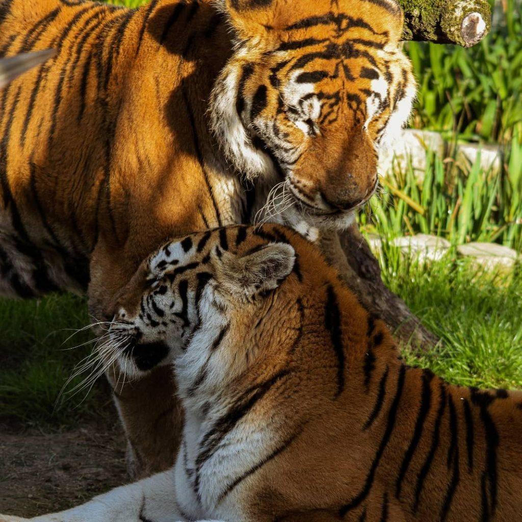 Zoo El Bosque de Oviedo